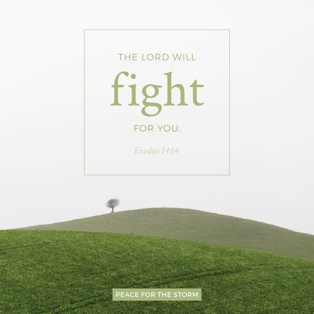 Peace for the Storm Quotes - The Lord will Fight for You