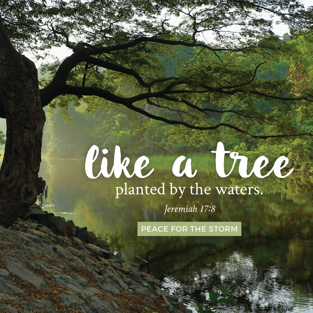 Peace for the Storm Quotes - A Tree Planted by the Waters