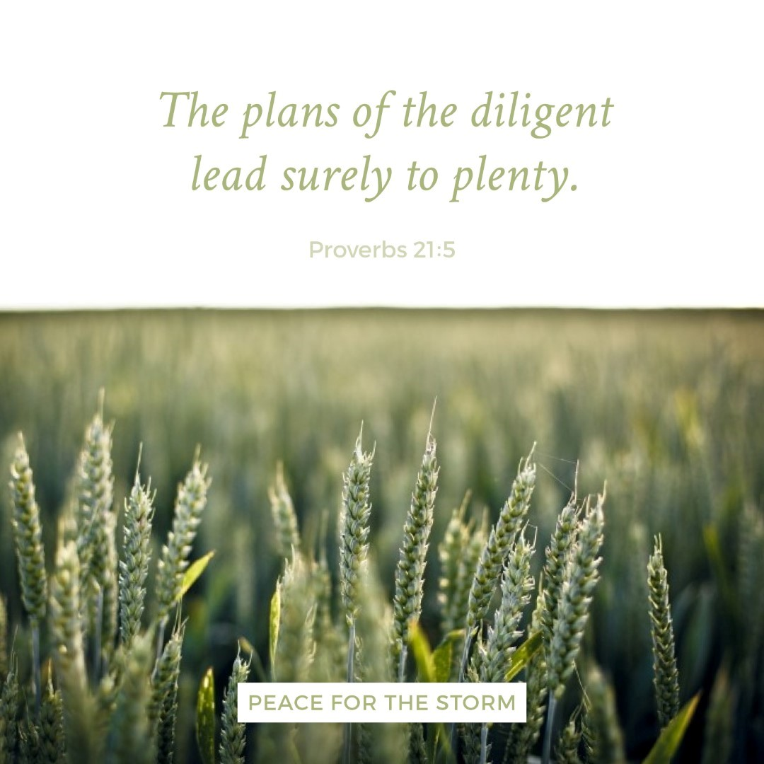 Peace for the Storm Quotes - Plans of the Diligent