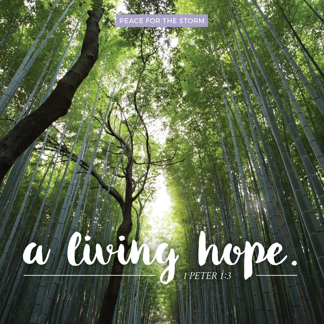 Peace for the Storm Quotes - A Living Hope
