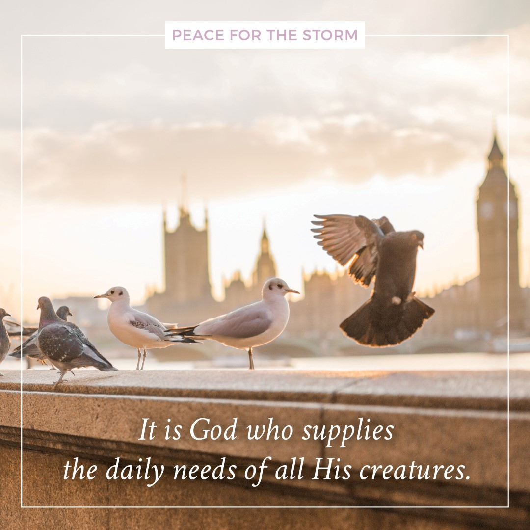 Peace for the Storm Quotes - Daily Needs