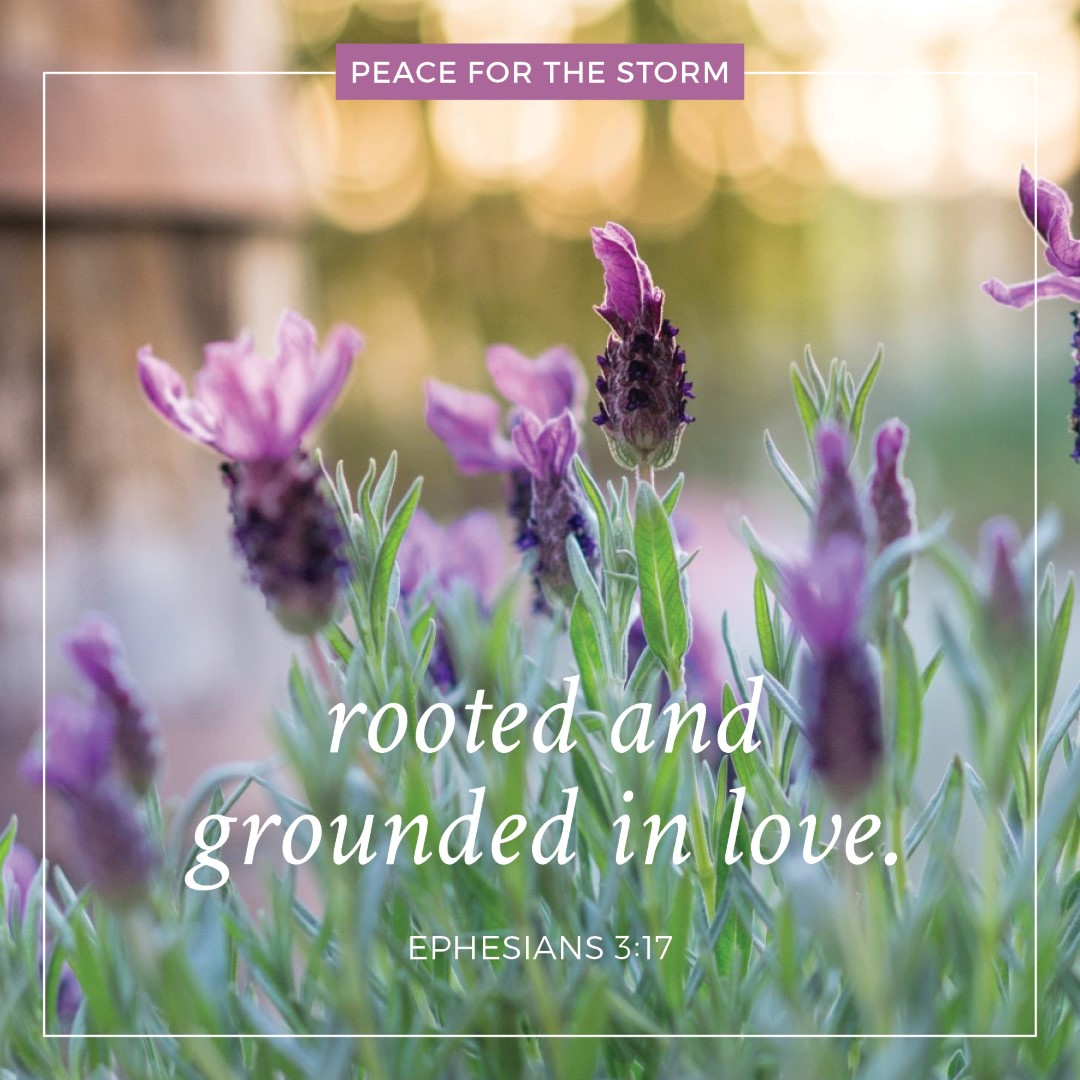 peace-for-the-storm-quotes-rooted-in-love